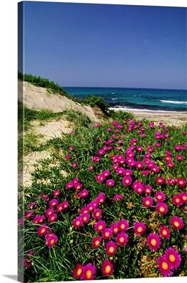 Italy, Apulia, Salentine Peninsula, Melendugno, Stretch of coast near Roca Vecchia