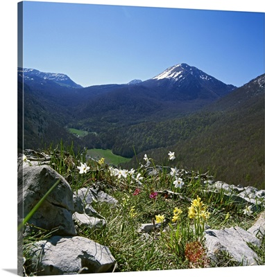 Italy, Basilicata, Orchid and narcissus flowers and Pollino mountain