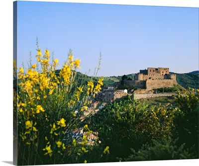 Italy, Calabria, Cosenza district, Rocca Imperiale, Castle and broom flowers