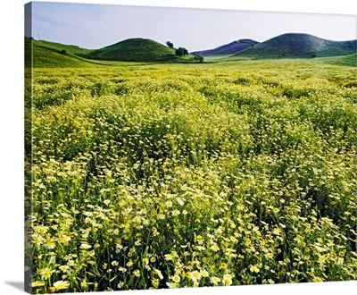 Italy, Calabria, Ionian Coast, Mediterranean area, Landscape in spring