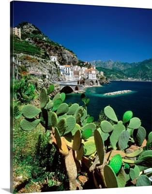 Italy, Campania, Amalfi Coast, Atrani, view of town and cactus