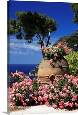 Italy, Campania, Capri, Flowers