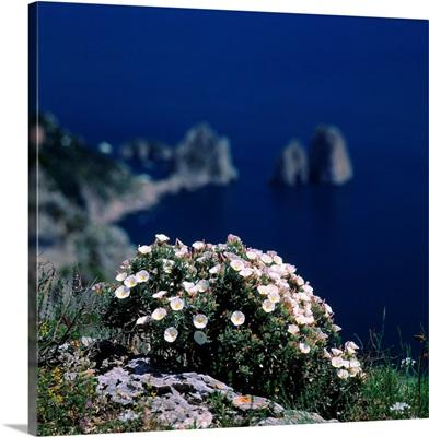 Italy, Campania, Capri, Vincitoxicum and Faraglioni