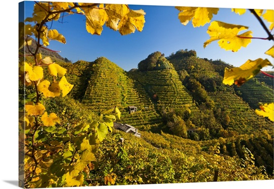 Italy, Col San Martino, Hills covered in Prosecco vineyards Wall Art ...