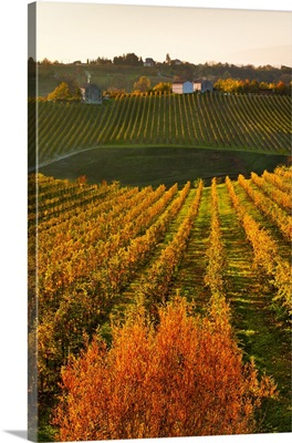 Italy, Collalbrigo, Prosecco vineyards