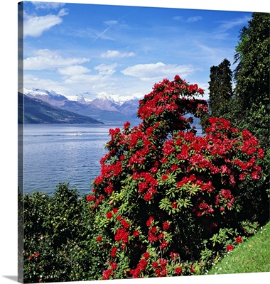 Italy, Como district, Villa Melzi, park with rhododendron on lakeside