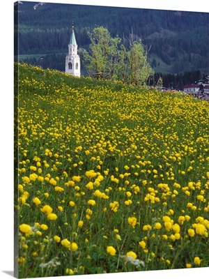 Italy, Dolomites, Belluno, Cortina, Field and bell tower
