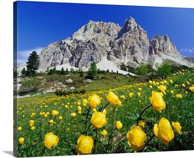 Italy, Dolomites, Belluno, Passo Falzarego, spring blossom and Monte Lagazuoi