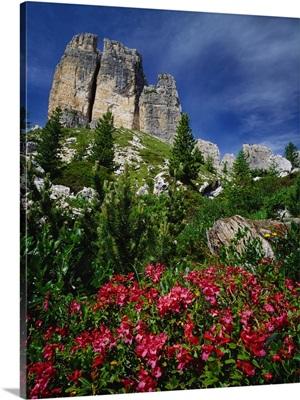 Italy, Dolomites, Belluno, Rhododendron flowers and Cinque Torri