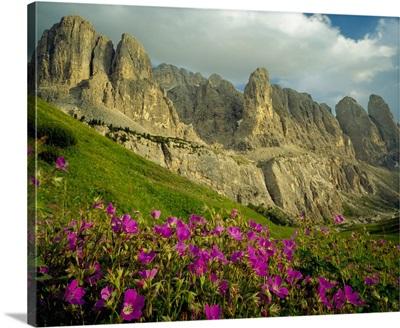 Italy, Dolomites, Passo Gardena, alpine meadow towards Sella