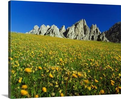 Italy, Dolomites, Passo Gardena (Grodner Joch), alpine meadow towards Piz da Cir