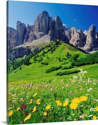 Italy, Dolomites, Passo Gardena (Grodner Joch), alpine meadow towards Sella