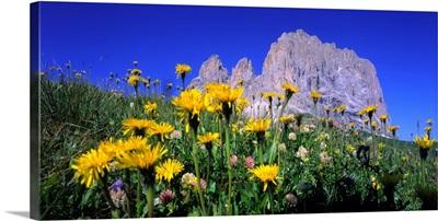 Italy, Dolomites, Sassolungo, Meadow and Sassolungo (Langkofel)