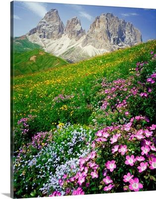 Italy, Dolomites, Sassolungo, Passo Sella, meadow and Sassolungo