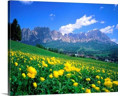 Italy, Dolomites, Trollius meadow towards the Mount Cristallo