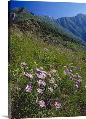 Italy, Friuli-Venezia Giulia, Alps, Prealpi Giulie Regional Park, Udine district