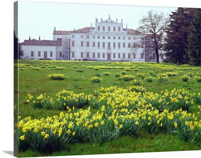 Italy, Friuli-Venezia Giulia, Passsariano, Villa Manin, narcissi in the park