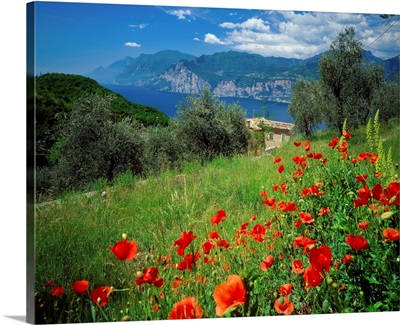 Italy, Lake Garda, Malcesine, Malcesine, view over the lake, poppies nearby