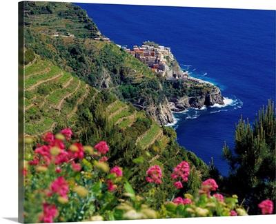 Italy, Liguria, Manarola, vineyards