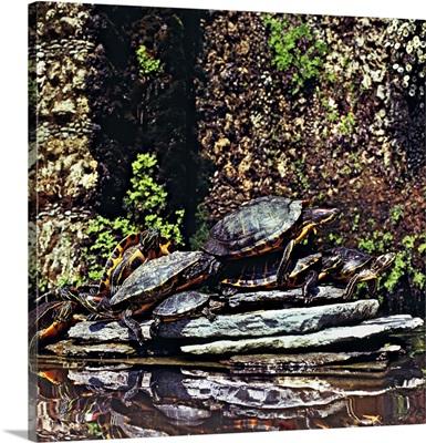 Italy, Lombardy, Como Lake, Tremezzo, Villa Carlotta, turtles in the fountain