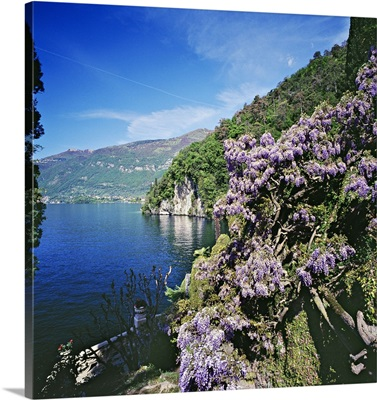 Italy, Lombardy, Villa Balbianello, wisteria in the park on lakeside