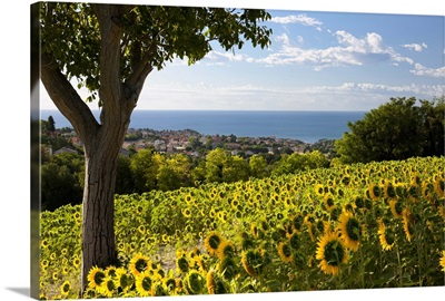 Italy, Marches, Parco del Conero, Numana, Countryside of Numana village with sunflowers