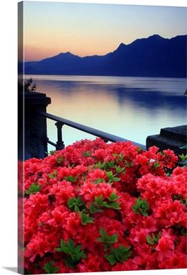 Italy, Piedmont, Lake Maggiore, Verbania, dawn, Azalea flowering on the lakefront