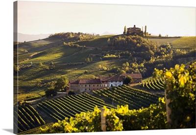 Italy, Piedmont, Langhe, Barolo, Mediterranean area, Cuneo district, Vineyards