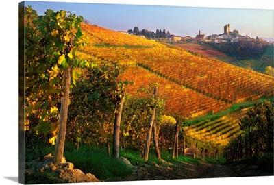 Italy, Piedmont, Langhe, Vineyards near Serralunga d'Alba village