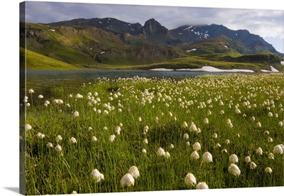 Italy, Piedmont, Valle dell' Orco, Colle del Nivolet, eriophorum bloom at Leytaz lake