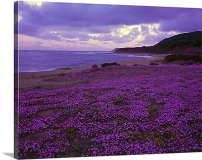 Italy, Sardinia, Costa Verde, beach near Marina di Arbus village