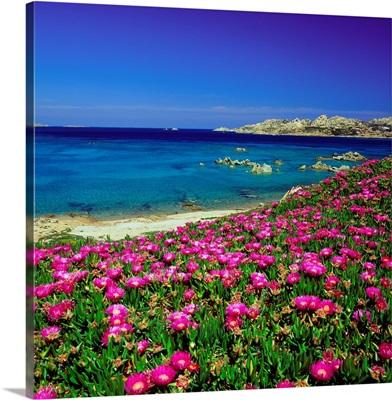 Italy, Sardinia, Maddalena, Coast in spring