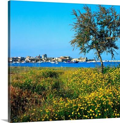 Italy, Sicily, Capo Passero, Port of Marzamemi