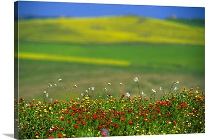 Italy, Sicily, Enna, Spring in countryside around Enna
