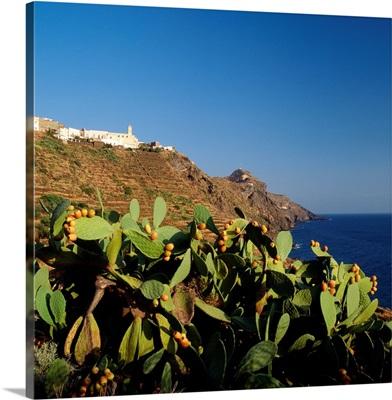 Italy, Sicily, Pantelleria, Scauri, fichi d'india
