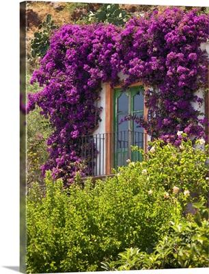 Italy, Sicily, Tyrrhenian sea, Lipari islands, Filicudi, Window with flowers