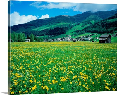 Italy, South Tyrol, Alta Pusteria, Meadow in spring and Sesto (Sexten)
