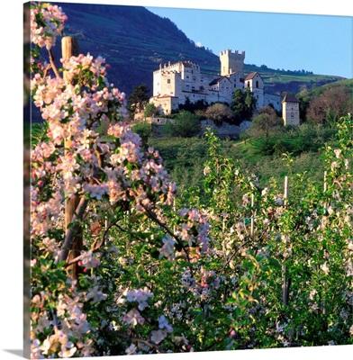 Italy, South Tyrol, Castel Coira (Churburg), apple trees in bloom
