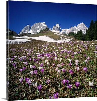 Italy, South Tyrol, Passo Monte Croce Comelico, view towards Croda Rossa mountain