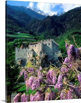 Italy, South Tyrol, Val Venosta, Castelbello (Kastelbell) and wisteria
