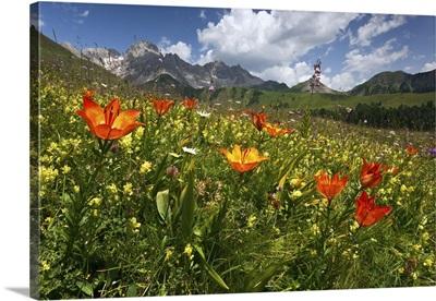 Italy, Trentino-Alto Adige, Dolomites, Trentino, Val di Fassa, Passo San Pellegrino