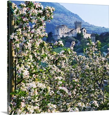 Italy, Trentino-Alto Adige, South Tyrol, Dolomites, Castel Coira and apple tree