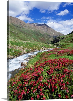 Italy, Trentino Alto Adige, Stelvio National Park, Alta Val di Saent, landscape