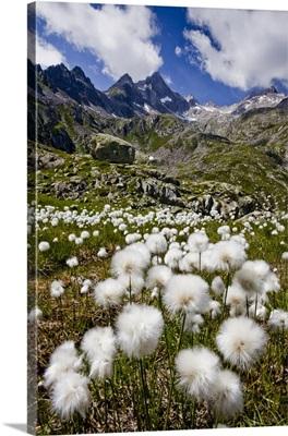Italy, Trentino-Alto Adige, Trentino, Alps, Dolomites, Val Rendena