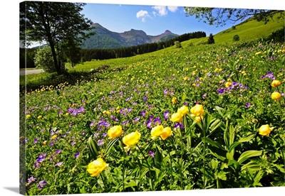 Italy, Trentino-Alto Adige, Trentino, Prati delle Viote del Bondone