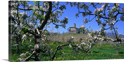Italy, Trentino, Apple orchard and Castel Valer