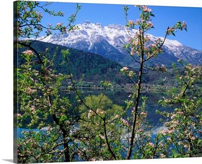 Italy, Trentino, Apple orchard and Lago di Caldonazzo