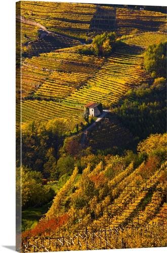 Italy, Trentino, Val di Cembra, Vineyards near Sevignano Wall Art ...