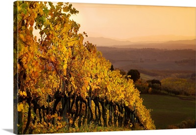 Italy, Tuscany, Chianti, Castellina in Chianti, Landscape close to the village