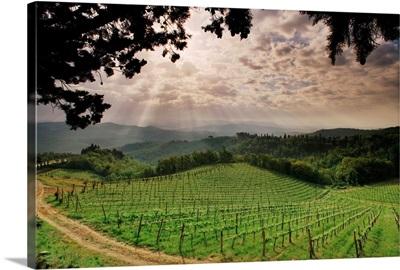 Italy, Tuscany, Chianti, Countryside near Vagliagli village